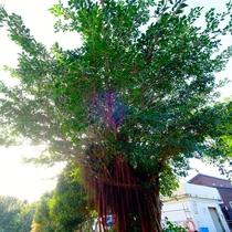 *[当館の庭]木々に囲まれた自然いっぱいの当館