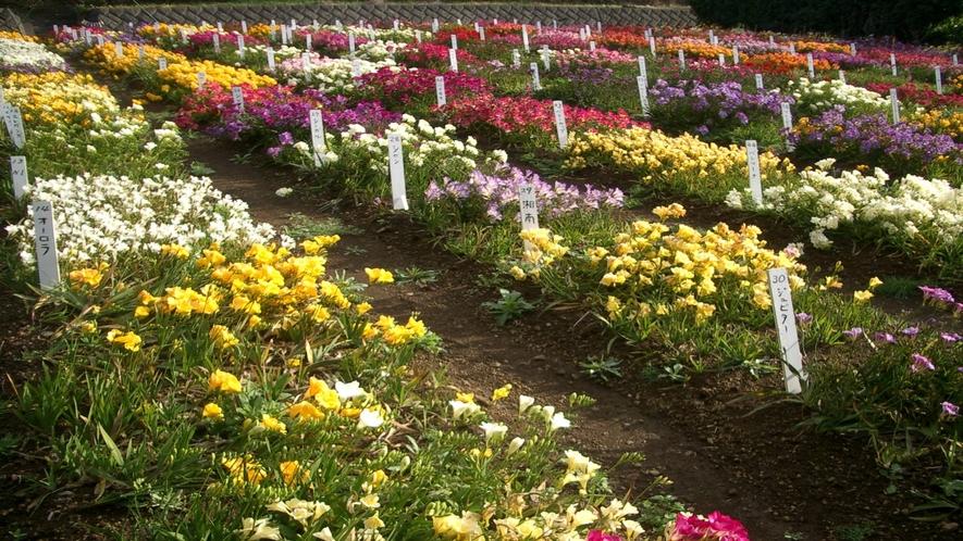 *農林合同庁舎ガイドツアー 島の農産物がたくさん! 一社)八丈島観光協会