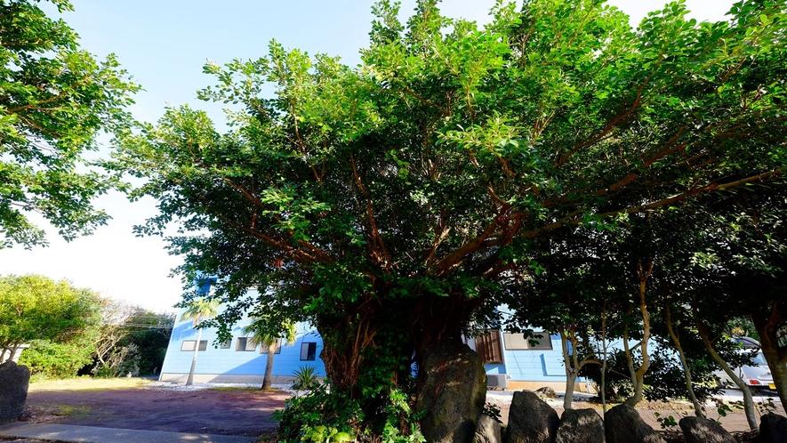 *[当館の庭]木々に囲まれた自然いっぱいの当館(c)2020一社)八丈島観光協会
