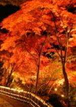 虹の郷ライトアップ