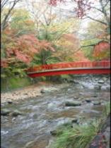 桂橋と紅葉