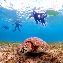 【奄美の海】ウミガメと…