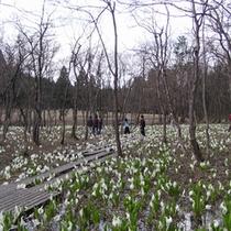 水芭蕉公園
