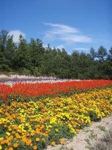 近くにある花畑