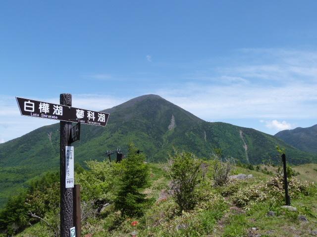 【春】6月 八子ケ峰西峰(1833m)から望む蓼科山です