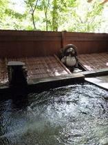 二人っきりで入れる露天風呂♪