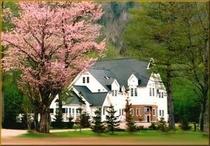 山桜とチャトラン