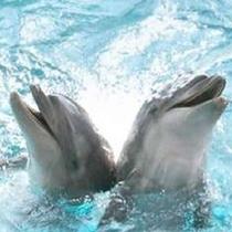 江ノ島水族館☆イルカに会いに行こう☆