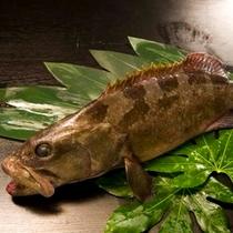 紀州本クエ ※料理一例