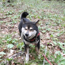 愛犬ココア裏山散歩風景