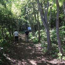 敷地内にある登山道。初級者~上級者向けに全部で4コースあります。1~2時間気軽に森林浴が楽しめます。