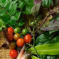 *山の恵み/自家栽培のお野菜や薬草で料理が彩ります