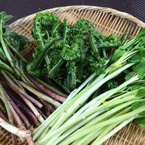 山で採れた新鮮な山菜