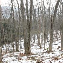 敷地内冬の登山道。一年を通して登山が楽しめます。
