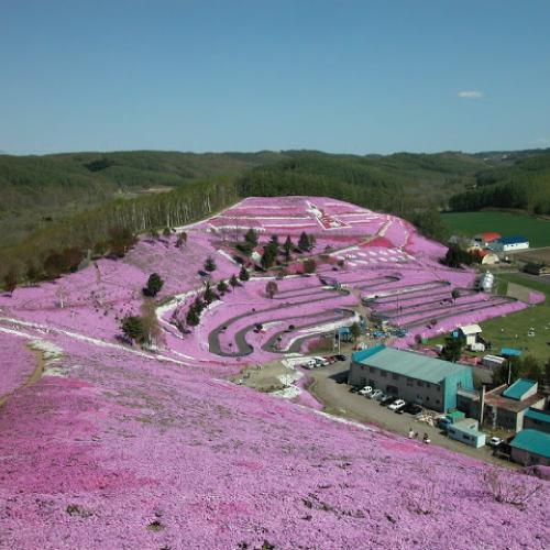 東藻琴 芝桜公園