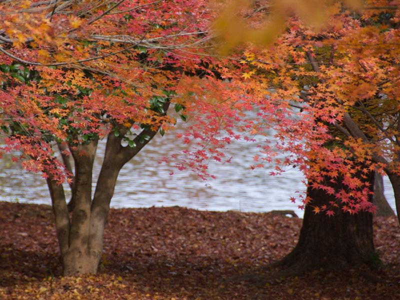 一碧湖の秋