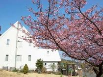 春!河津桜と当館外観。