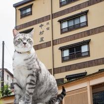 *宿の中で看板猫たちと触れ合えます!草津温泉 中村屋旅館