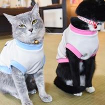 *ヤマト&サスケ/兄弟猫といっしょ!