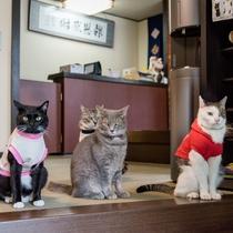 *全員集合!当館の看板猫スタッフたちです!