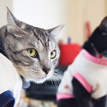 *コタロウ&ヤマト/兄弟猫といっしょ!