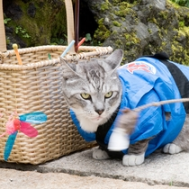 *コタロウくん/祭りの一張羅と共に。夏は草津温泉のお祭りが多く、賑わいます!