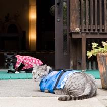 *コタロウくん&ヤマトくん/ちょっと一休み…。猫好きの方が訪れる湯畑近くの旅館です。