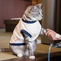 *コタロウくん/猫さん好きな方は僕と握手!