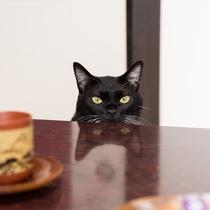 *ヤマト/お部屋にはお茶とお茶菓子も人数分ございまして…~(=^・ω・^)_旦