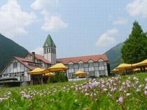 ラベンダーが咲くホテル中庭