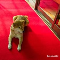 看板犬のマドレーヌ