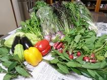 知人の家庭菜園から送られてくる彩豊かなこだわりの新鮮野菜。