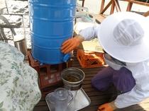 オーナーが養蜂を行い、はちみつ採集もしています。