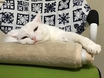 看板猫のマリー