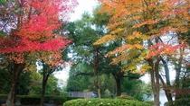 ・四季の彩りが美しい公園など、「金鱗湖」には魅力的なスポットが点在