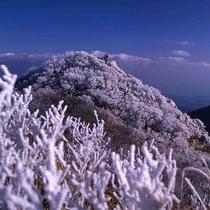 【冬 -霧氷-】