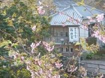河津桜の福田家