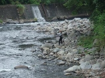 福田家前の河津川で鮎つり