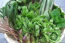春の山菜シーズンは毎日収穫しております。