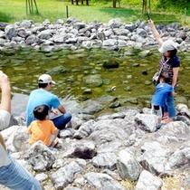 大見いこいの広場周辺を流れる高時川は、水位が一定に保たれているので、小さなお子様の水遊びにも最適★