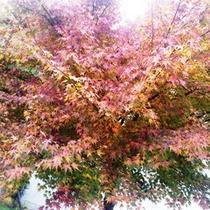 【秋の風景】
