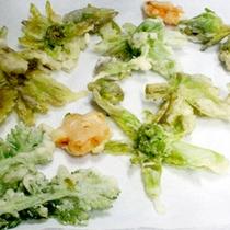 4月末頃まで参加費300円で山菜採りへ♪採った山菜は天婦羅でお召し上がりいただけます♪