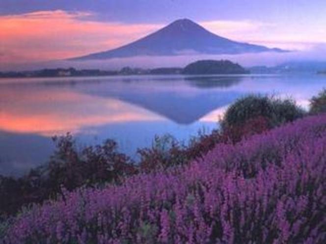 河口湖・ハーブ・富士山