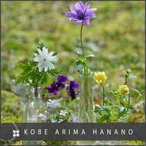 春の花たち、アネモネ