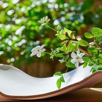 夏のお花:山芍薬の実と白鉄仙
