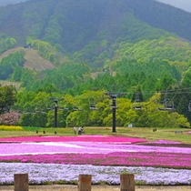 *【周辺観光】黒姫<車で30分>/6月は「芝桜」が一面に咲き、多くの人が訪れます(6月撮影)