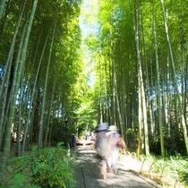 【竹林の小径】ミシュラングリーンガイド二つ星の見事な竹林です。