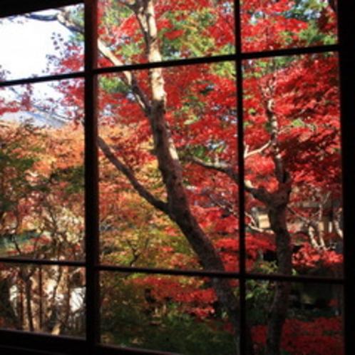 【紅葉6/11〜12月】