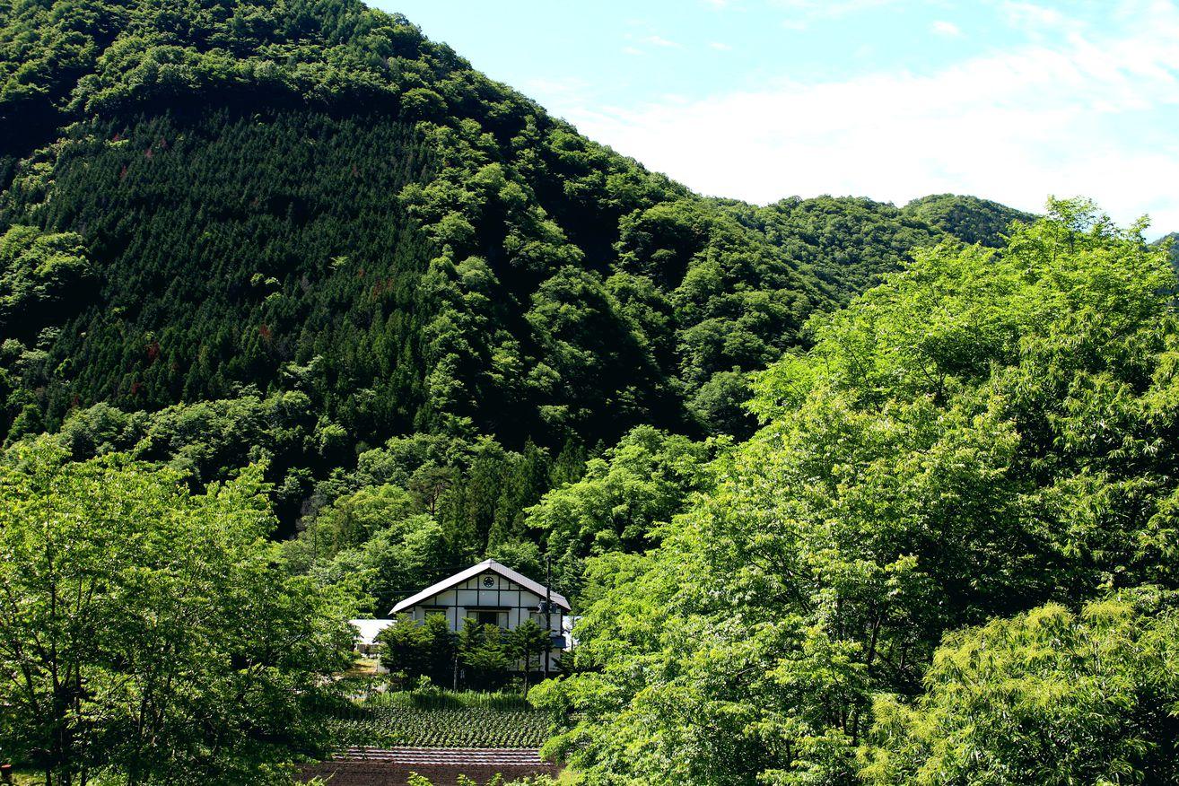 緑の山々に囲まれて 『民宿 やま久』