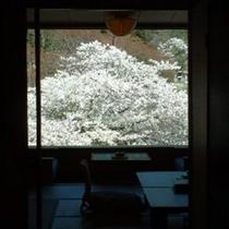 ■桜景色・東館